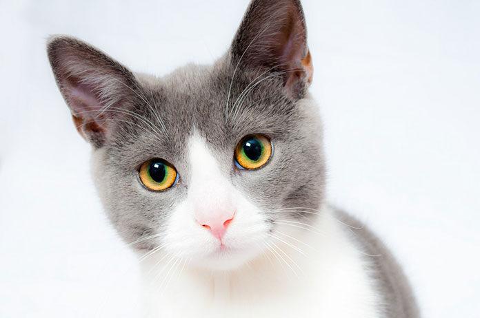 Taste of The Wild karma dla kota