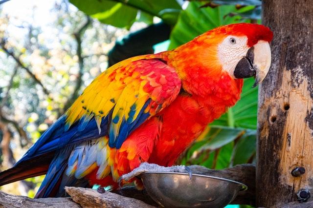 karma dla ptaków egzotycznych
